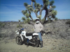 Jac On Her Green Dirtbike Joshua Tree Forest Image